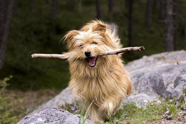 Bild Hund beim Apportieren