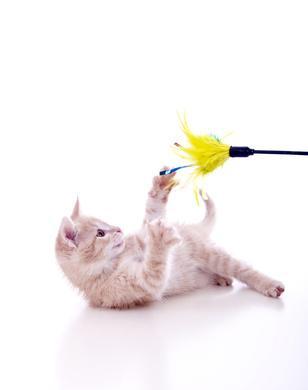 Bild Katzenspielzeug mit junger Katze