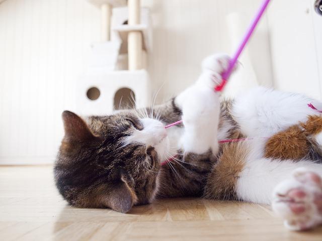 Bild Katze spielt mit Schnur