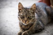 Kaufvertrag für Katzen