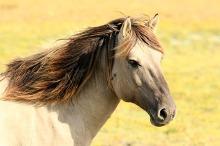 Kaufverträge für Pferde