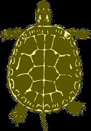 Auch Schildkröten sind für Kinder eher ungeeignet.