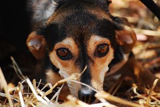 Bild Hund Tollwut
