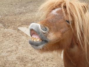 Pferden das Lachen beibringen: Ein lustiger Trick