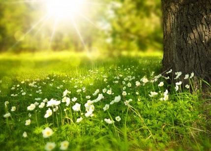 Sonnenschein und Wiese