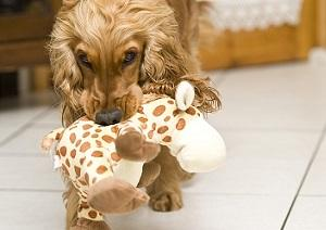 Hund mit Spielzeug allein Zuhause