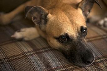 Hund liegt auf Couch
