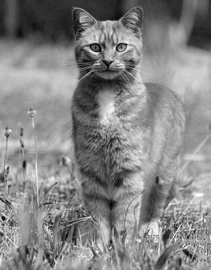 Bild Katze in Feld