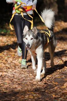 Bild Joggen mit Hund