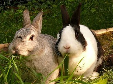 Bild fressende Kaninchen