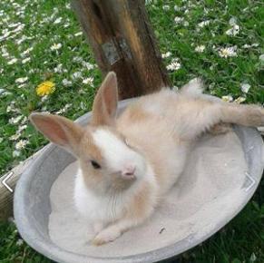 Kaninchen liegen im Sommer gerne auf kühlem, aufgebuddeltem Sand.