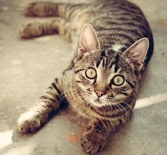 Katze wartet auf Gesundheitscheck