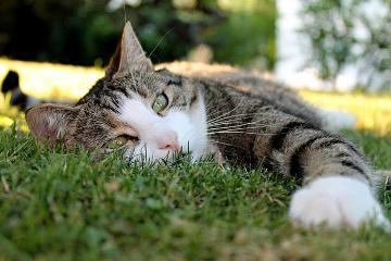 Extreme Hitze macht nicht nur Menschen, sondern auch Katzen zu schaffen.