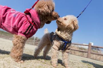 Hunde in Kontakt