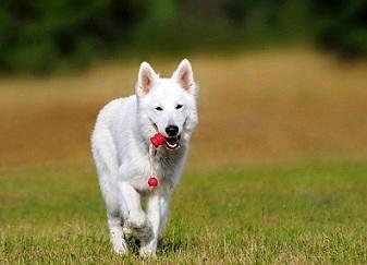 Bild Hund mit Welpen