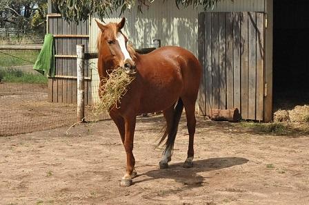 Pferd Heu