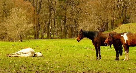 Vergiftung beim Pferd