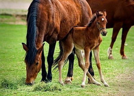 Zuchtbuch für Pferde