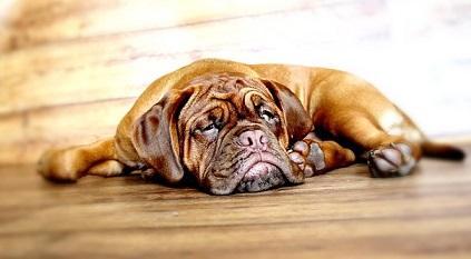 Vorsorgeuntersuchung beim Hund
