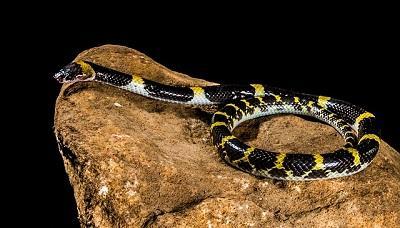 Schlange auf einem Stein