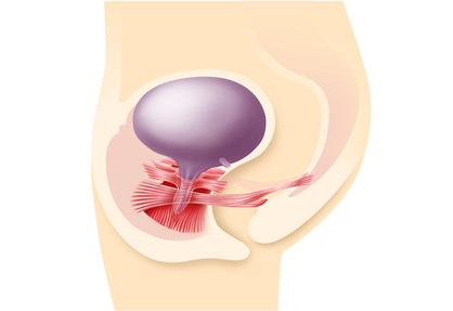 Beckenbodenmuskulatur Frau