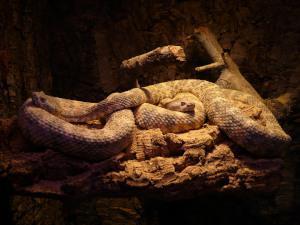 Schlangenhaltung Licht & Wärme