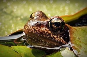 Bild Frosch Teich