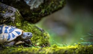 Schildkröte im Terrarium