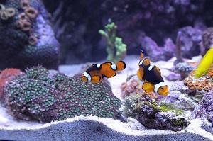 Umzug Aquarium Fische vorbereiten
