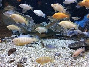 Bild Fische