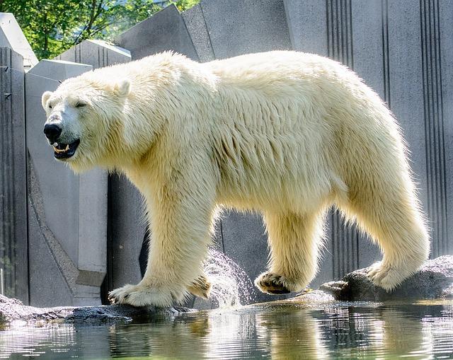 Bild Tierpark Hellabrunn