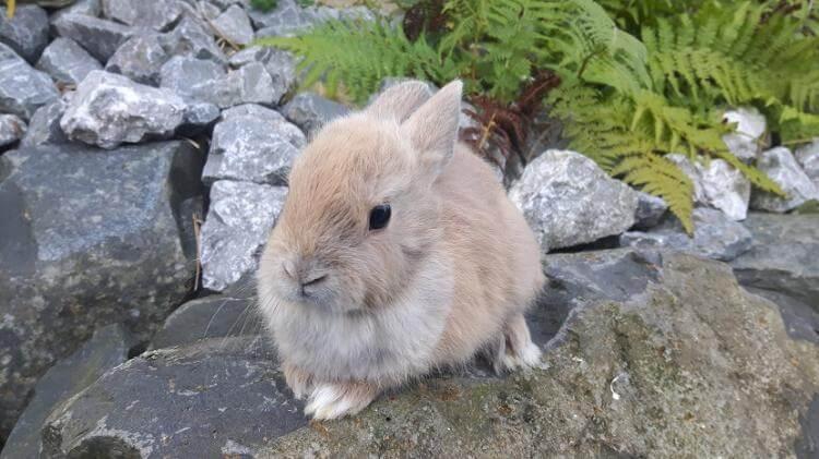 Kaninchen im Freien.