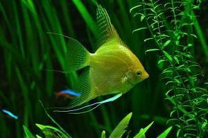 Aquarium Umzug Fisch