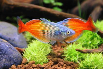 Fische Bild