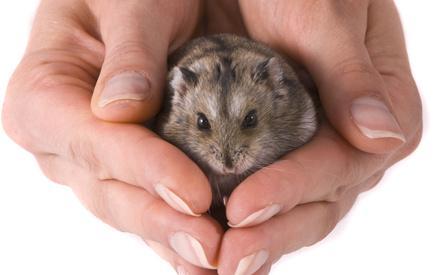 Bild von Hamster in Händen