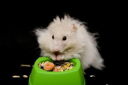 Bild von Hamster mit Futter