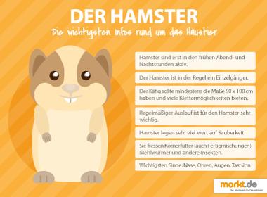 Infografik Hamster Haltung