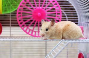 Hamster im Gehege