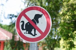 Bild Schild Hunde verboten