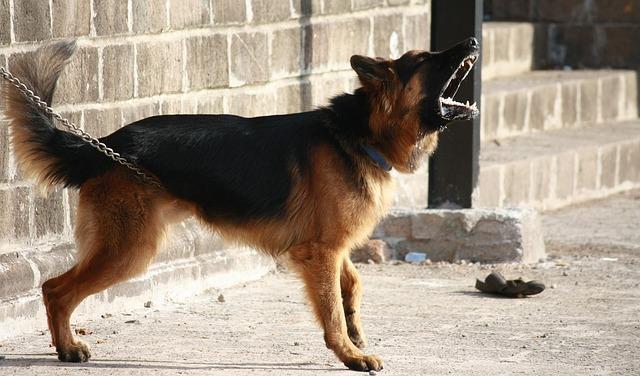 Hundebellen