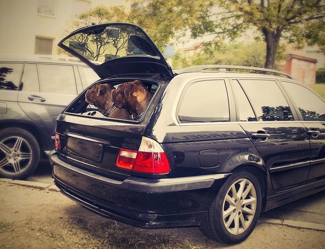 Hunde im Kofferraum Urlaub