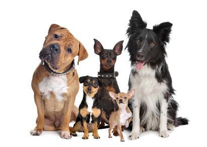Bild verschieden große Hunde