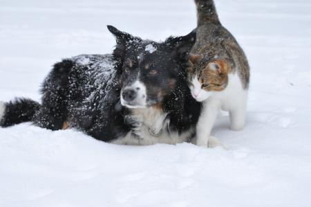 Katze und Hund im Schnee