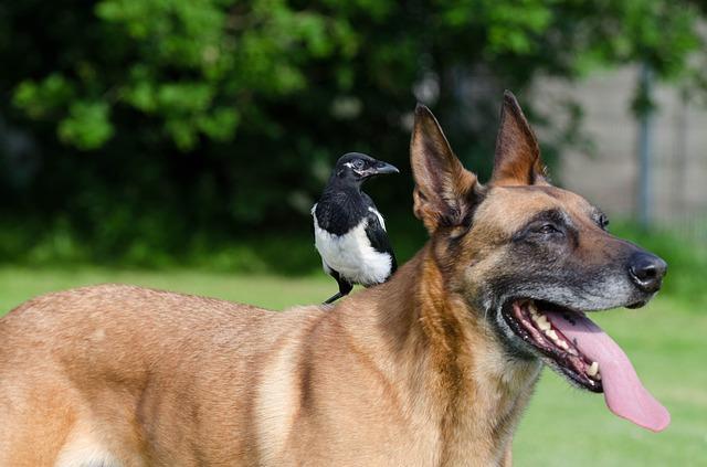 Bild Hund mit Vogel