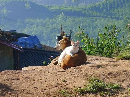 Bild Hund mit Katze