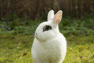 Weißes Kaninchen für Kinder