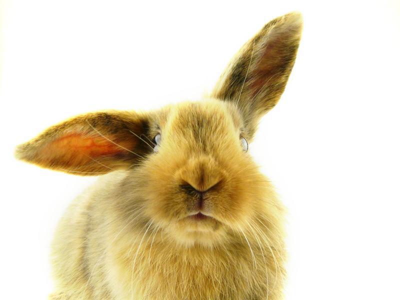 Kaninchen Bild