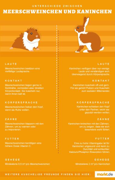 Bild Unterschiede Kaninchen und Meerschweinchen
