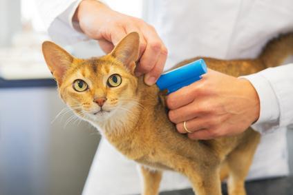 Bild von Katze mit Mikrochip