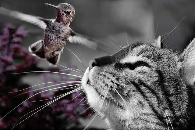 Vogel und Katze